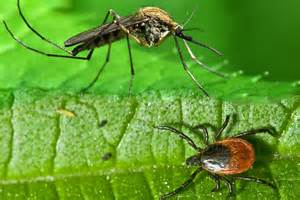 Image result for ticks and mosquitoes